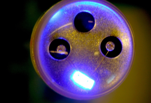 A phosphor is a coating applied to a blue LED to turn blue light white